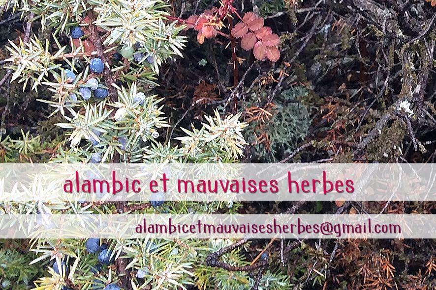Journée dédiée aux Plantes à Parfum Aromatiques et Médicinales